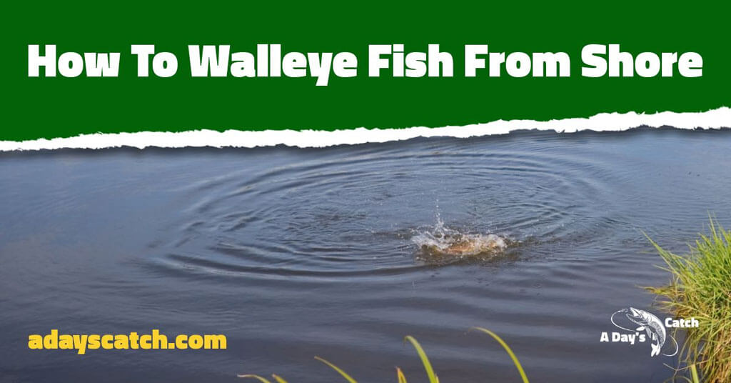 how t catch walleye from shore