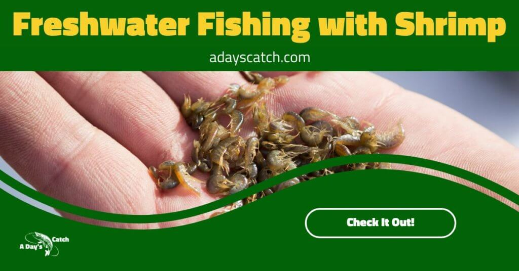 Freshwater Fishing with Shrimp