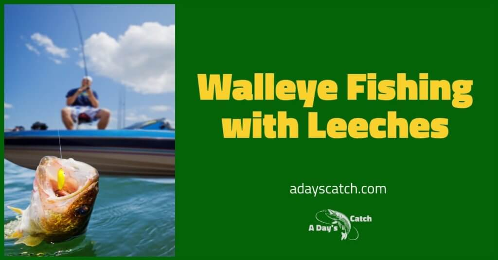 Walleye Fishing with Leeches