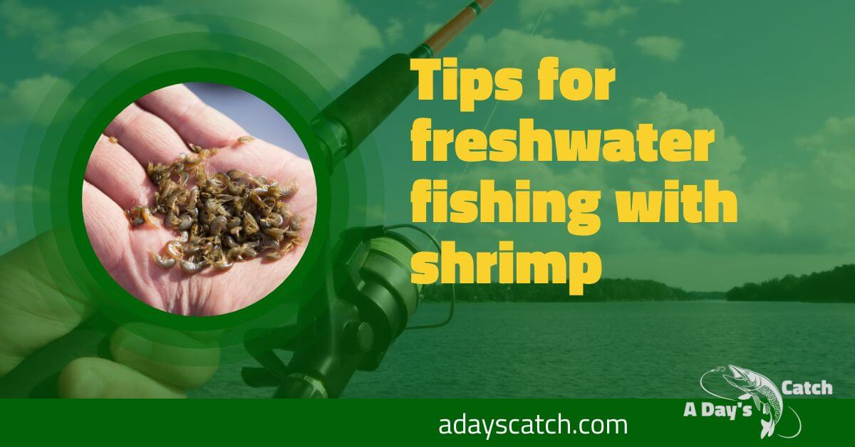 Tips for freshwater fishing with shrimp
