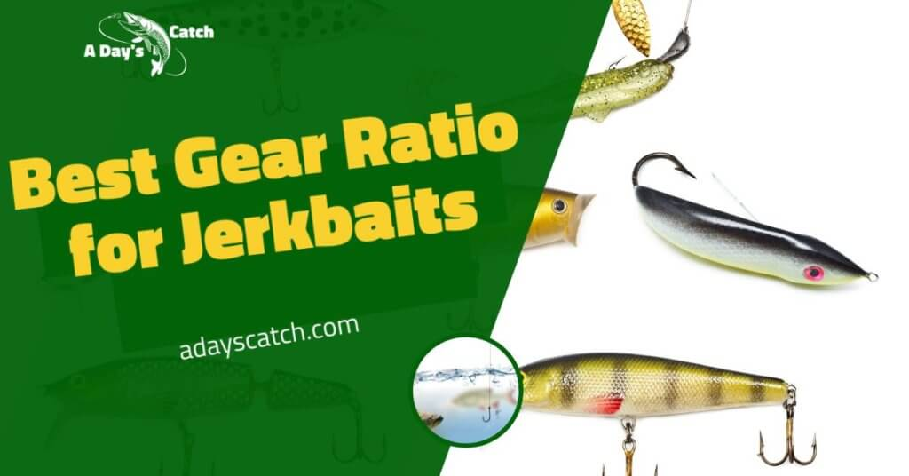 Best Gear Ratio for Jerkbaits