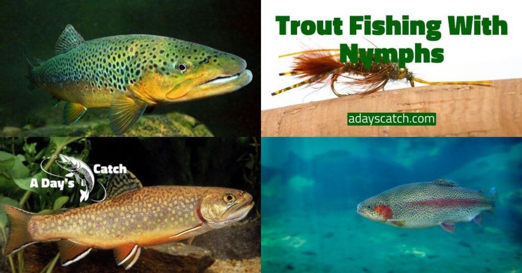Flyfishing for trout with nymphs