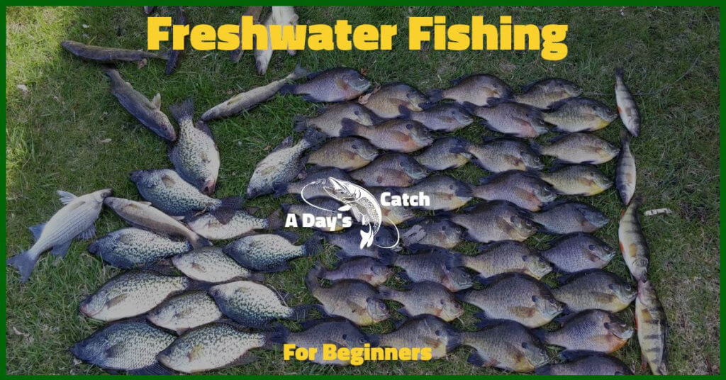 Freshwater Fishing Tips For Beginners