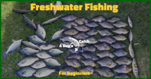 Freshwater Fishing Tips For Beginners