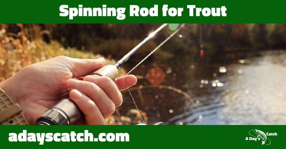 Spinning rod for trout
