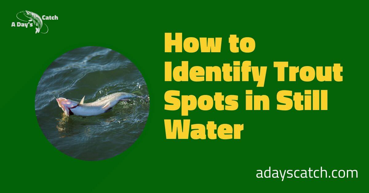 How to Identify Trout Spots in Still Water