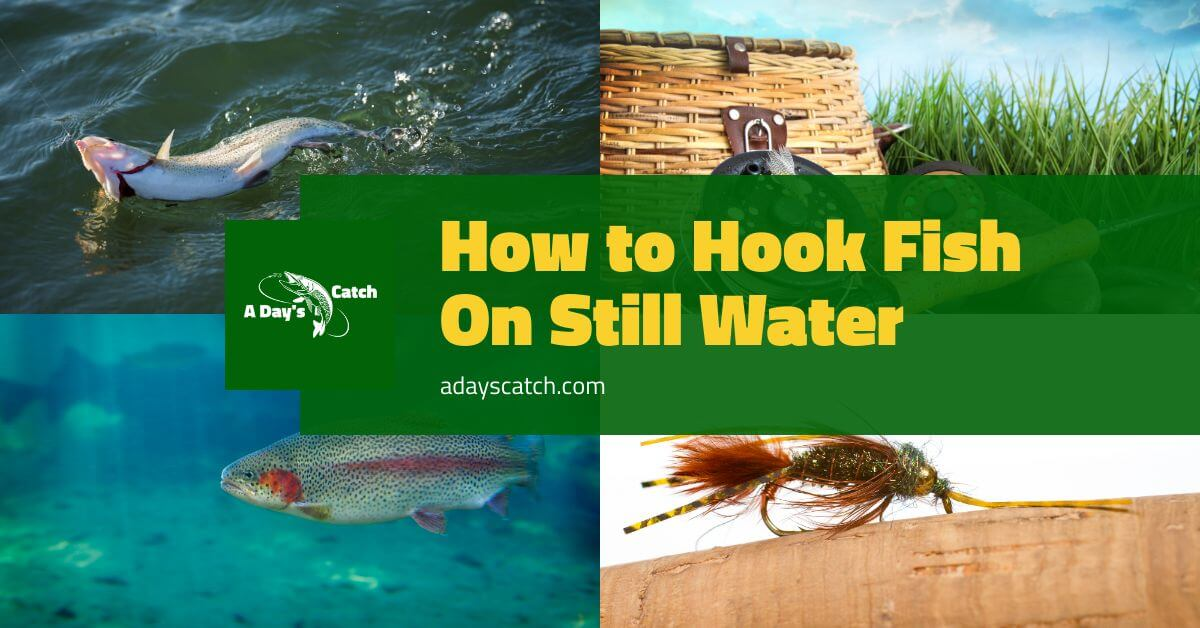 How to Hook Fish On Still Water